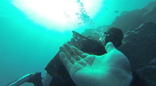 Blue Bottom Diving: El Puertito