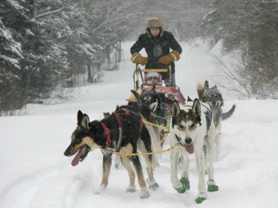 Lodge at Moosehead Lake: Dog Sledding is great fun from the Lodge
