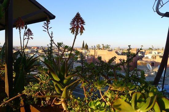 Un Déjeuner à Marrakech : Un Déjeuner à Marrakech Roof Top