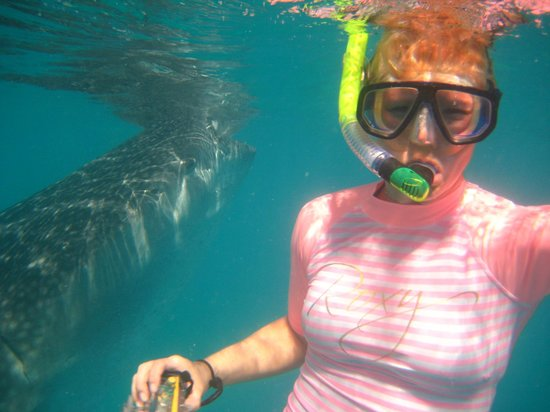 Amorita Resort: Whale shark in Oslob