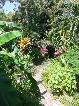 Hotel Chillies: Garden view from front of cabin