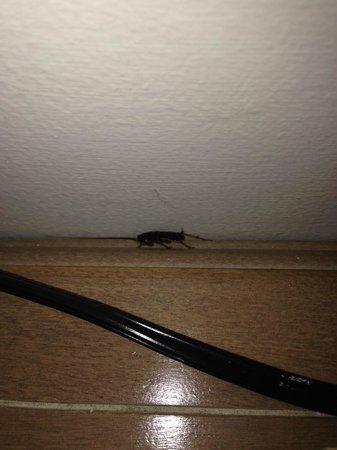 Iberostar Rose Hall Beach Hotel: cockroach