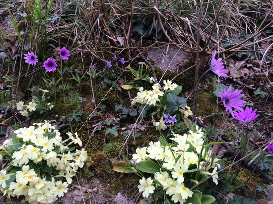 Torriani Palace: Anemones and Primroses beside the hiking trails