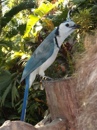 Hotel Luz de Mono: This bird steals sugar packets and eats them in the trees