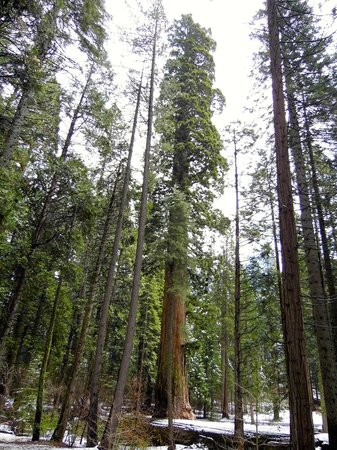 Mountain Retreat Resort: Calaveras Big Trees State Park