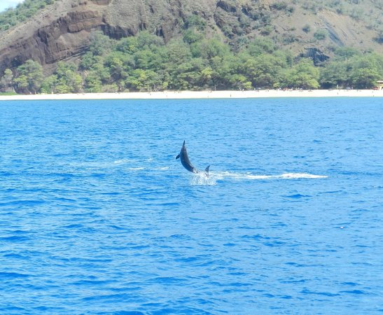 Trilogy Excursions : A Spinner Dolphin