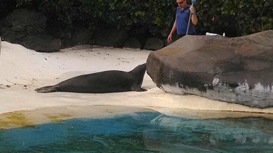 Sea Life Park Hawaii : .