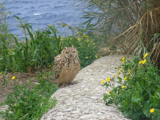 owl at blue grotto