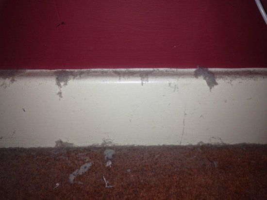 The Greyhound Hotel: Dust & dirt on skirting board