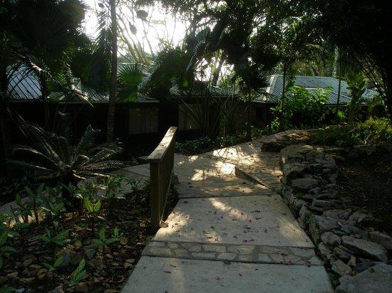 Belcampo Lodge : Walkway