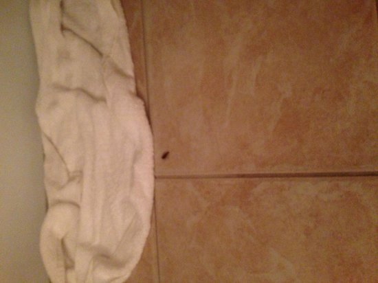 Econo Lodge Airport at Raymond James Stadium: Roaches in the bathroom