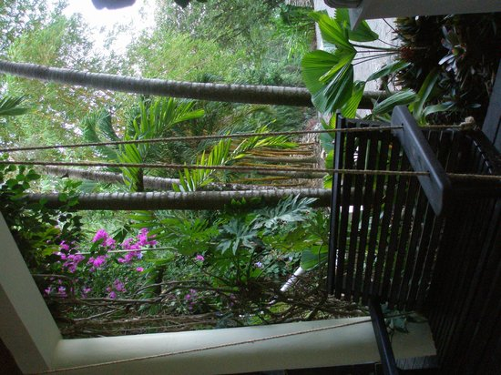 Copal Tree Lodge, a Muy'Ono Resort: Beautiful fauna