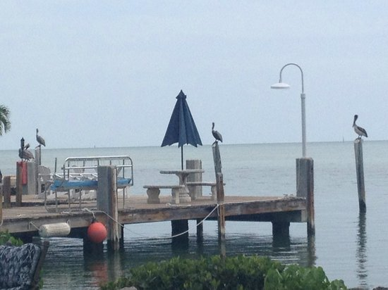 Seascape Motel and Marina : Dock with lots of pelicans