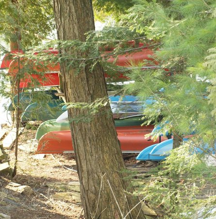 Sauble Falls Bed & Breakfast: Canoes, Kayaks and Stand up paddle boards for guests to try