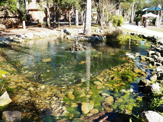 Fountain of Youth Archaeological Park: A natural spring-crystal clear
