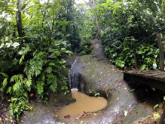 La Loma Jungle Lodge and Chocolate Farm: jungle hike