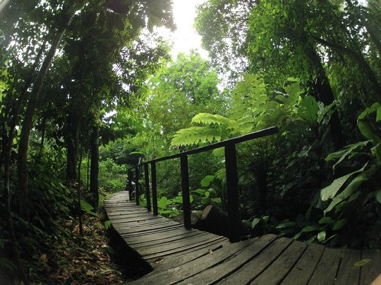 La Loma Jungle Lodge and Chocolate Farm : the pathway to Heaven