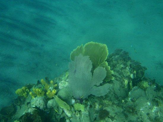 Anse Mamin: Snorkeling