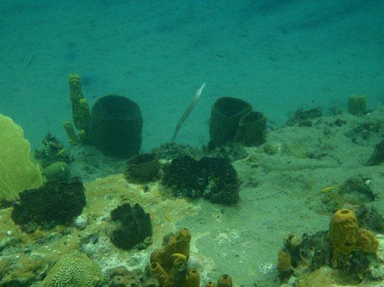 Anse Mamin: Snorkeling again.
