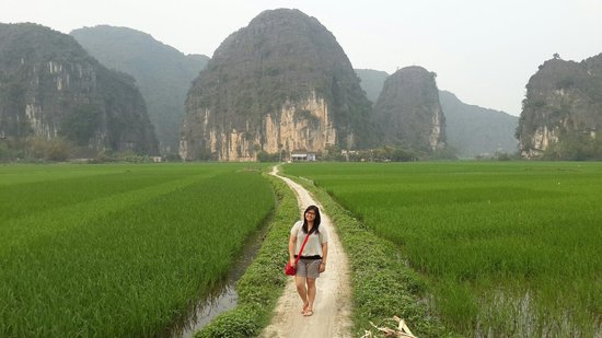 Tam Coc : View at the paddy fields while we go cycling