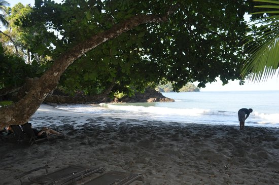 Tulemar Bungalows & Villas: The beach from the lounge chairs in the shade