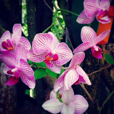 Garden of the Groves : Orchids at the Garden