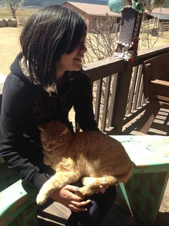 Victory Ranch: Chloe and resident kitty cat