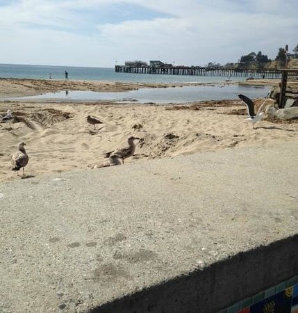 Capitola City Beach: Sharing the view with the local Seagulls