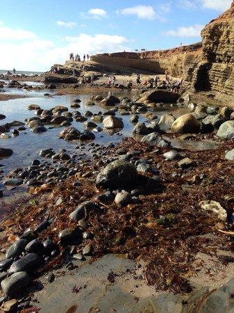 Sunset Cliffs Natural Park: Tide pool lowest time