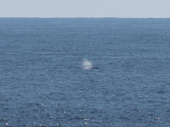 A Snug Harbour Inn: A whale, seen from our balcony