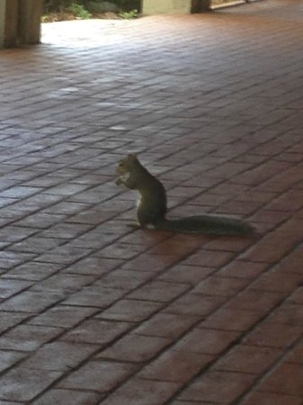 Doubletree by Hilton Orlando at SeaWorld: Squirrel