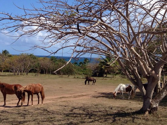 Blue Horizon Boutique Resort: Horses roaming the property.