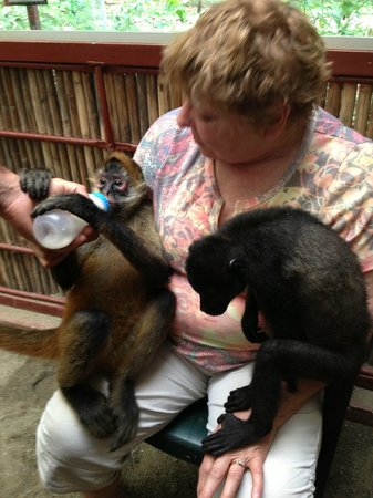 Foundation Jaguar Rescue Center: bottle feeding baby  monkeys