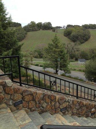 Chalk Hill Winery: Vineyards