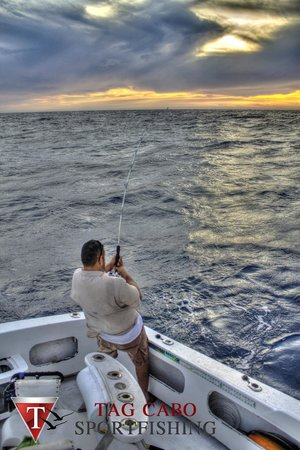 Fighting a marlin picture of tag cabo sportfishing for San diego private fishing charters