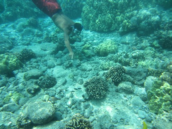 Hawaii Pack and Paddle Day Tours: Bari is an awesome guide and steward!