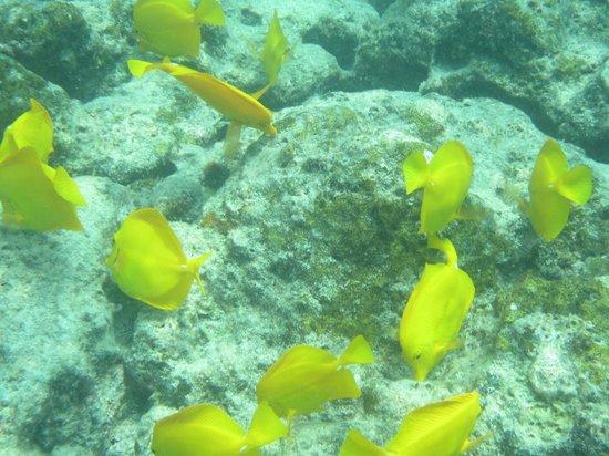 Hawaii Pack and Paddle Day Tours: Kealakekua Bay Snorkeling