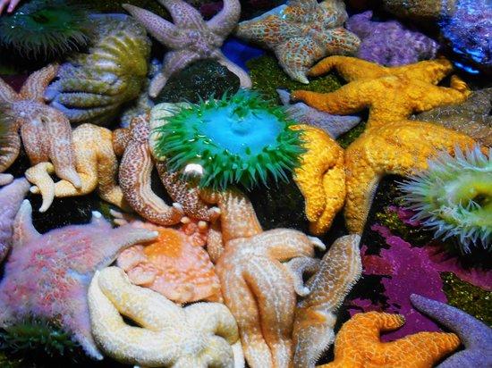 Oregon Coast Aquarium: Starfish
