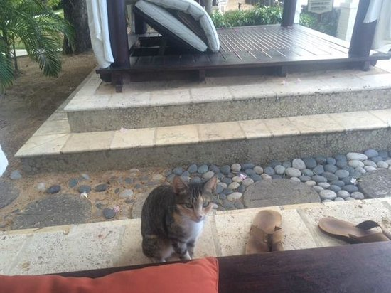 Sandals Regency La Toc: This feral cat wouldn't take no for an answer. Cute cat, but pushy even in our cabana!