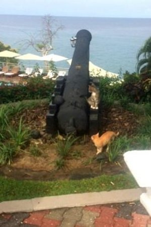 Sandals Regency La Toc Golf Resort and Spa: More cats...