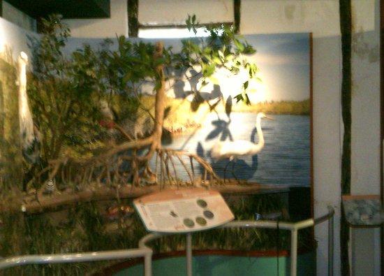 Cayman Islands National Museum: Bird Eco Display
