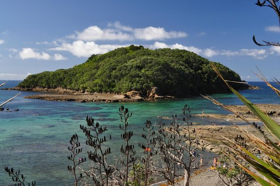 Goat Island Marine Reserve: Ideal conditions mid Feb