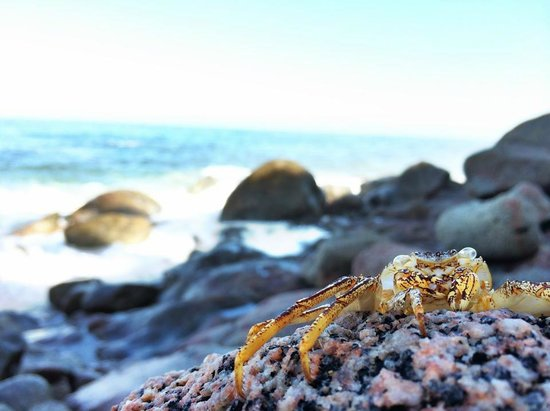 Playa Escondida: la playa y un visitante