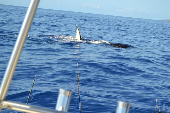 Start Me Up, Sport Fishing: Whales so close to the boat!