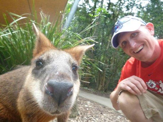 Hartley's Crocodile Adventures : wallaby