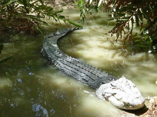 Hartley's Crocodile Adventures : big croc