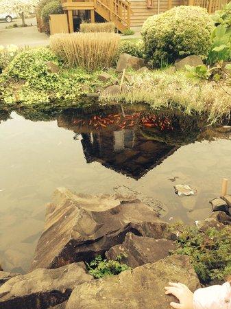 Inn at Cannon Beach: Pond