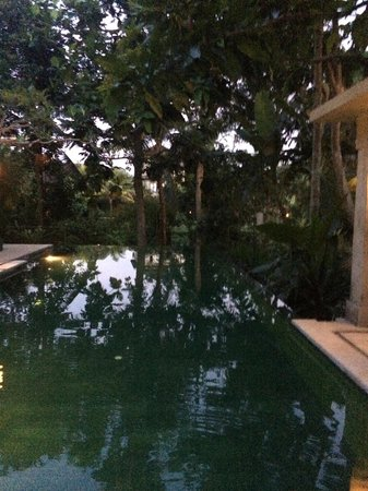 Komaneka at Monkey Forest: It's a bit dark but the infinity pool has a serene vibe surrounded by lush greenery