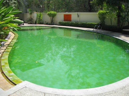 The Kris Resort: green pool!
