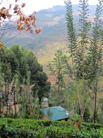 The Tea Cottages Resort & Spa: garden